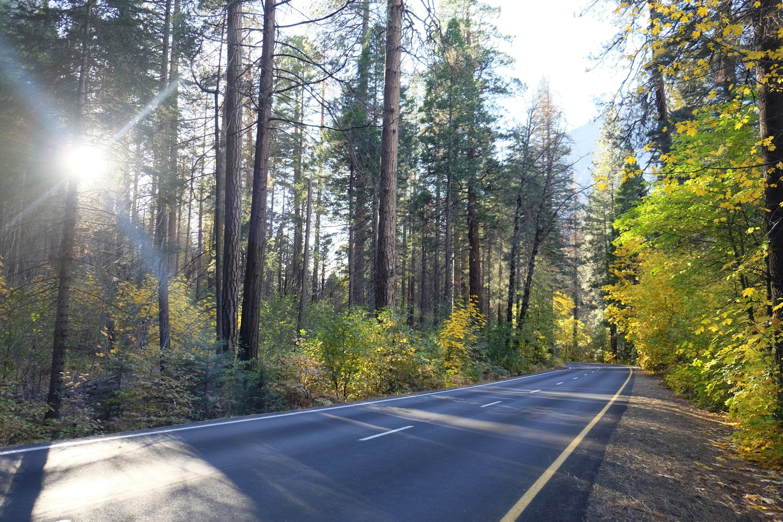 Road sun through trees