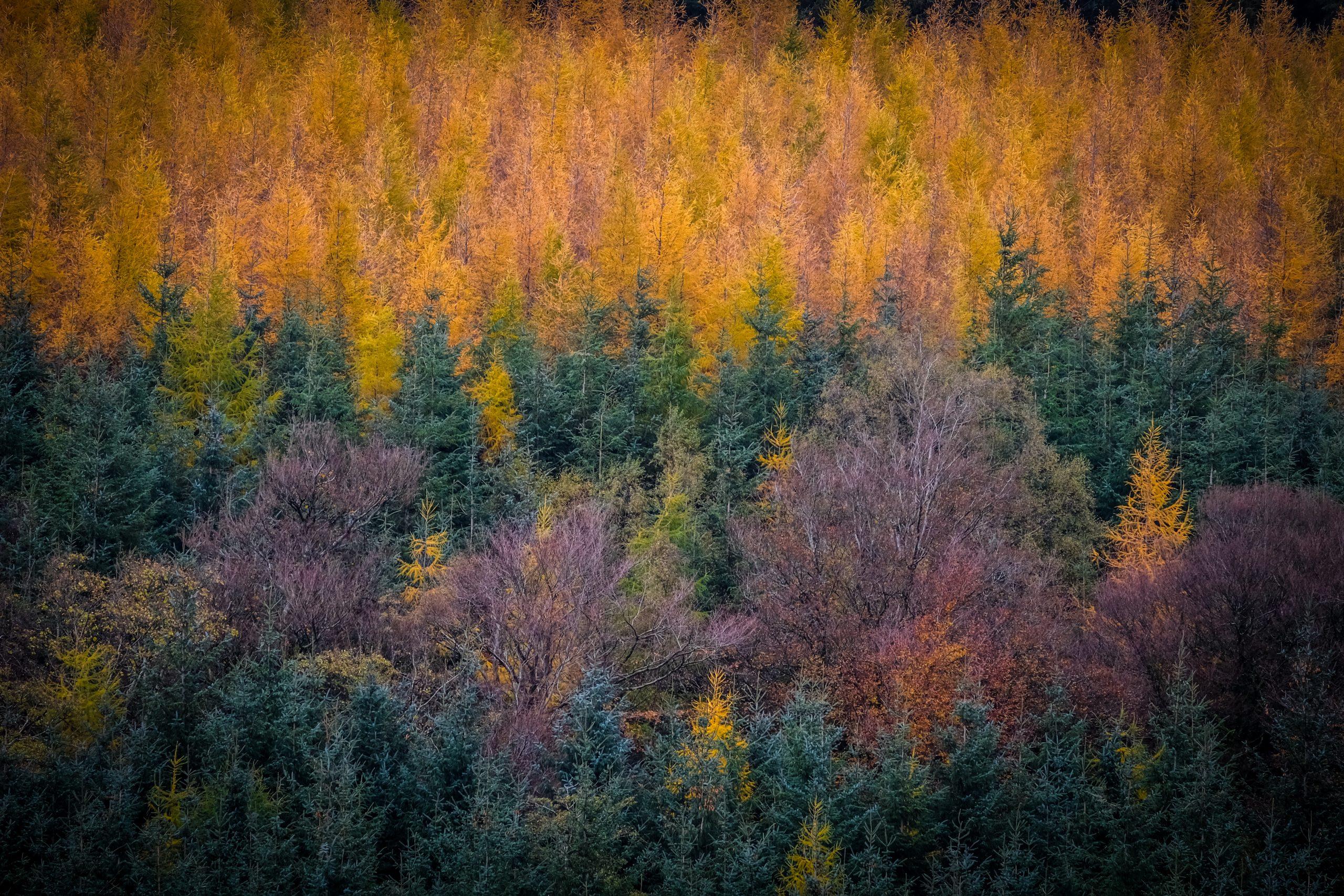 autumn-colours-fiona-madden-photography