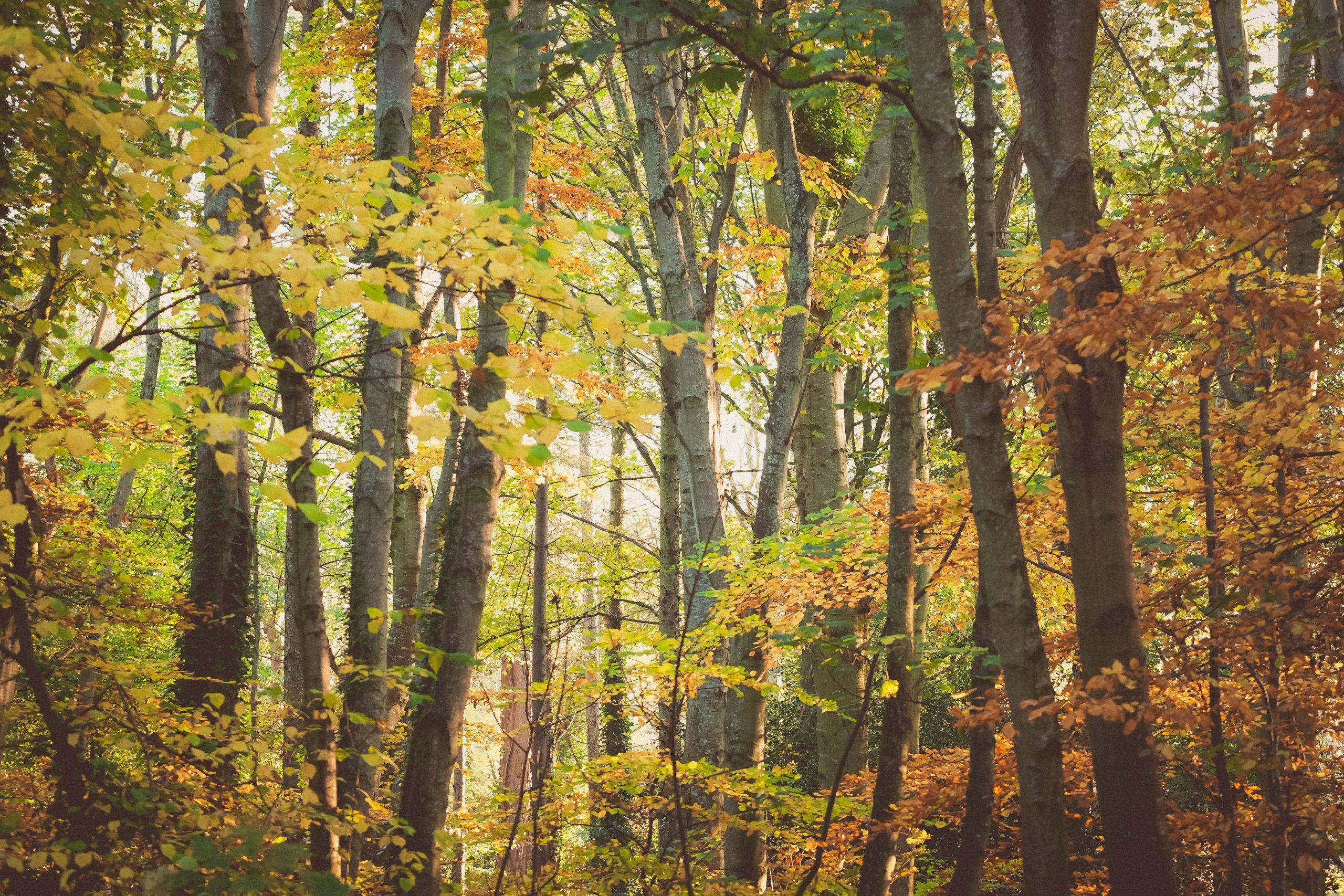 autumn-malahide