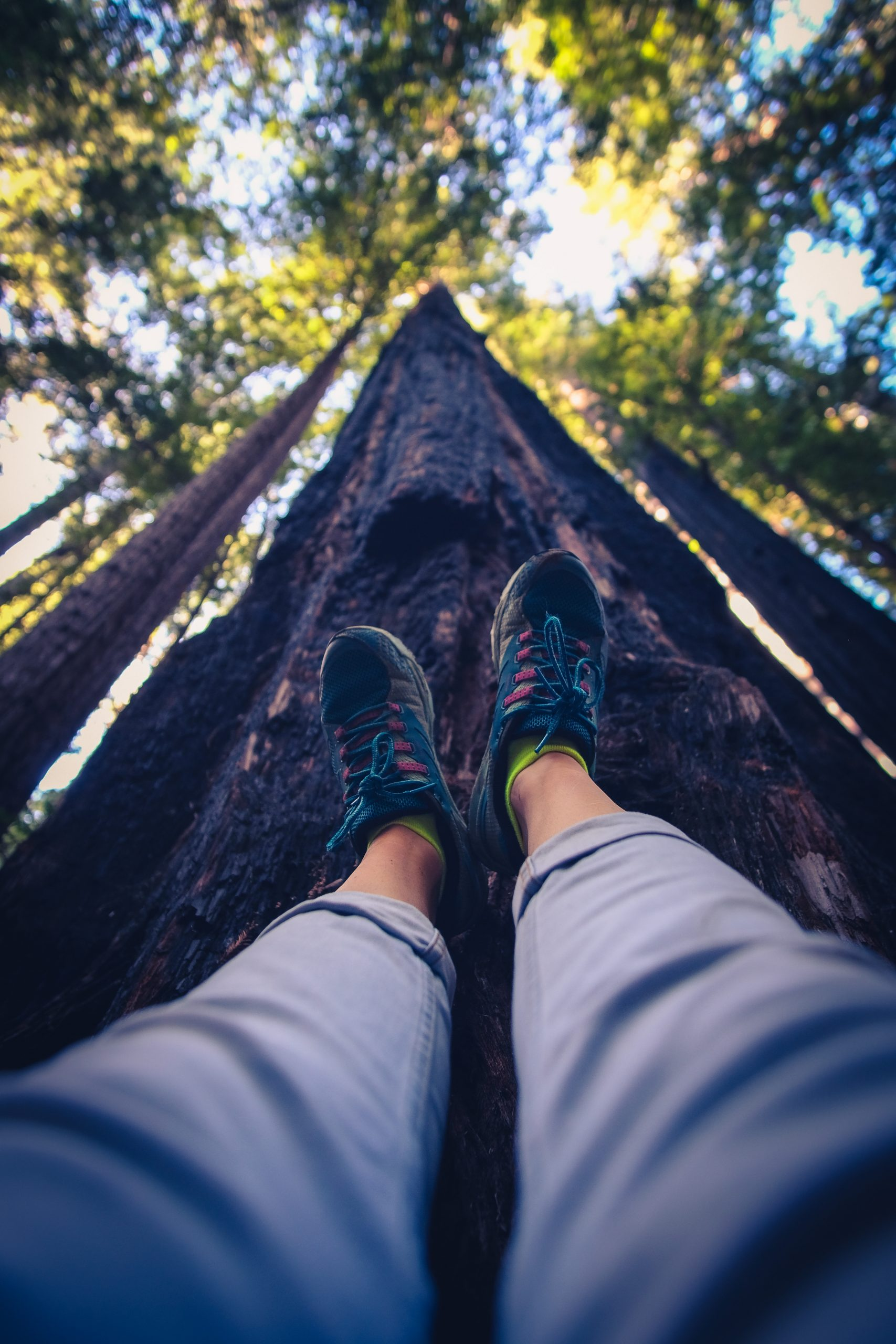 fiona-madden-photography-travel-redwoods