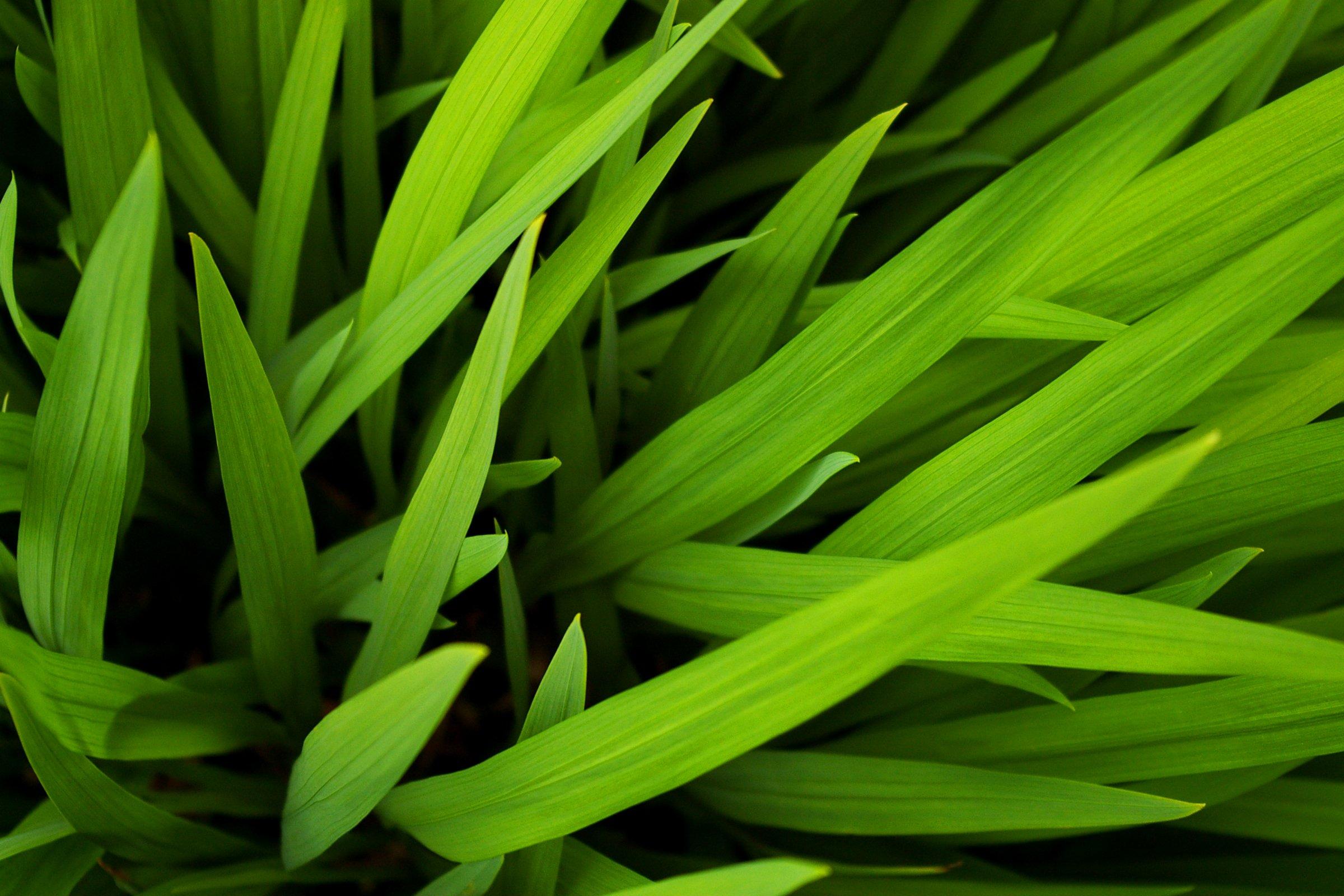 grass-green-irish-fiona-madden-photography