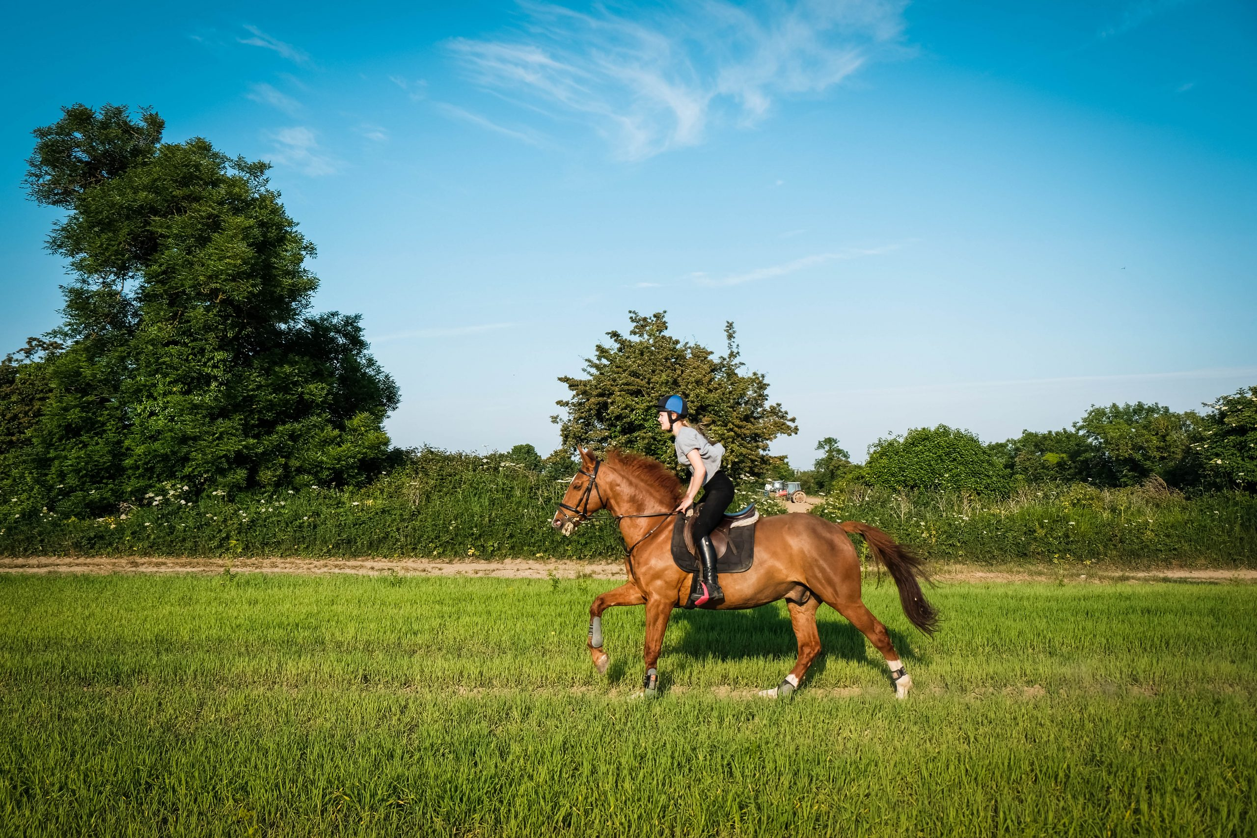 horse-galloping-fiona-madden-photography
