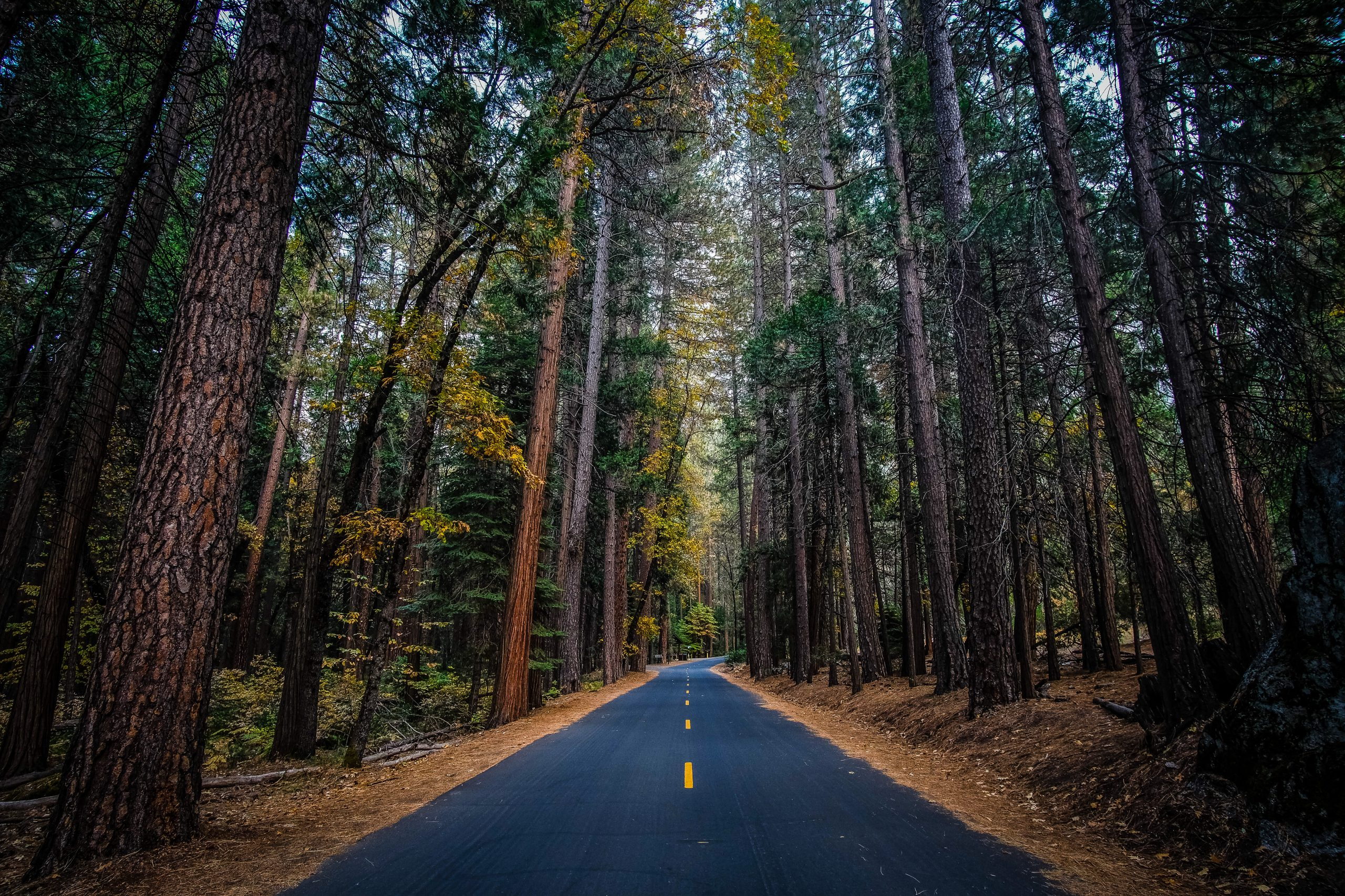 yosemite-roads